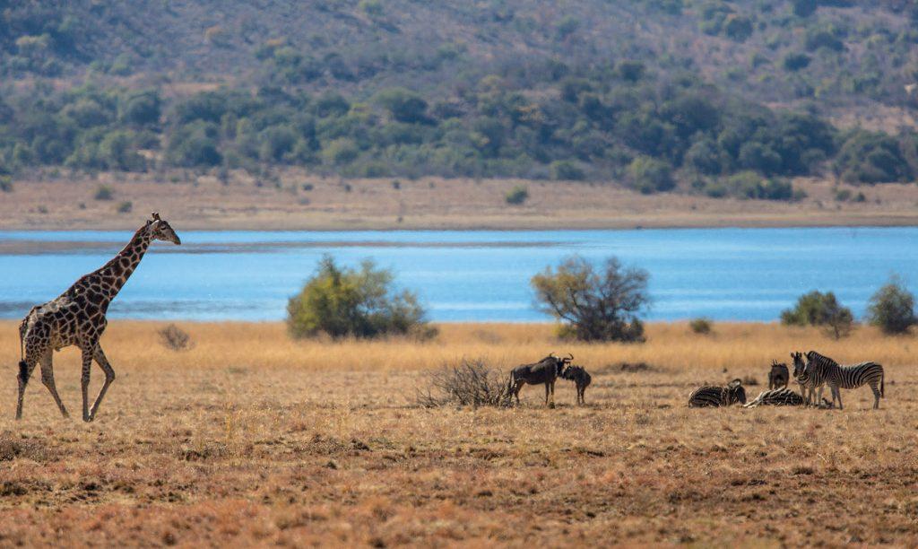 Safari a Sudáfrica