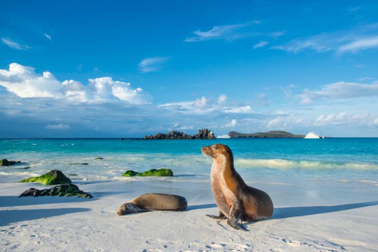 Galapagos Hurtigruten Expeditions