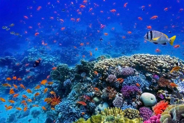 Mar Rosso MSC Bellissima